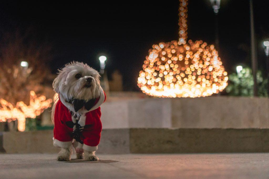 Der undurchschaubare Schokoladen-Weihnachtsmann