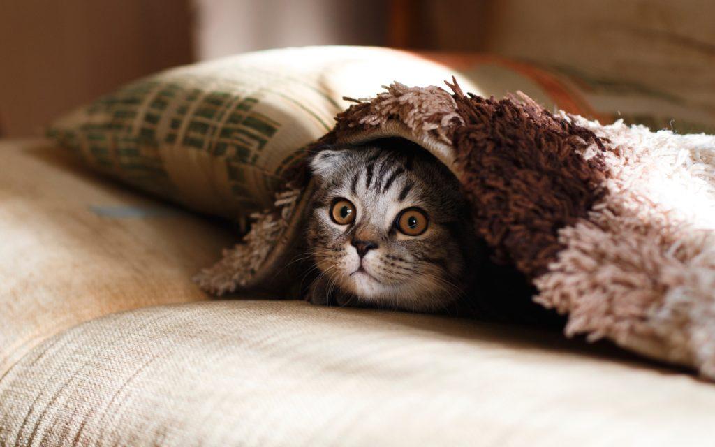 Der Katzenkönig-Fall – Ein Klassiker