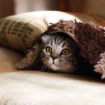der katzenkönig-fall