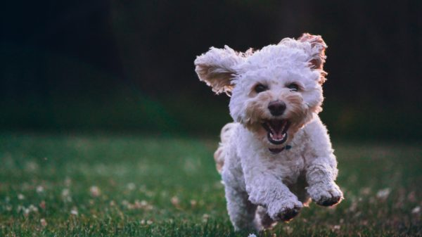 zurückbehaltungsrecht bei hunden
